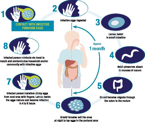 prevention of enterobiasis
